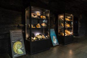 Wystawa w muzeum dinozaurów