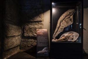 Muzeum dinozaurów - polskie eksponaty