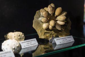 Kości dinozaurów muzeum