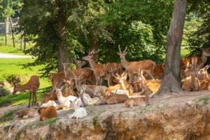 Park Safari - Jelenie