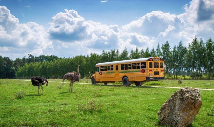 Autobus - zwiedzanie parku