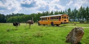Odwiedź nasz Park Safari podczas weekendu majowego