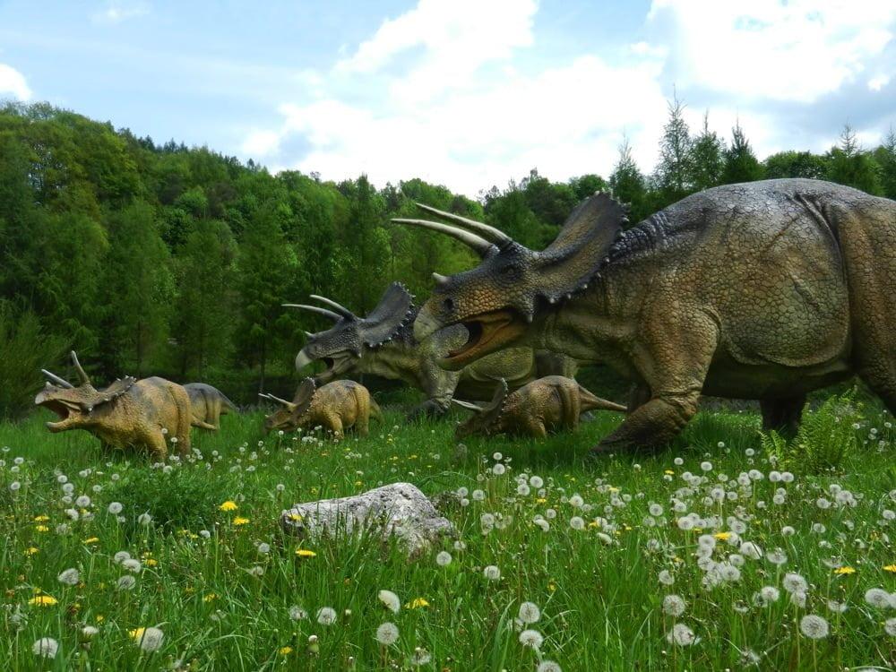 dinozaury triceratops