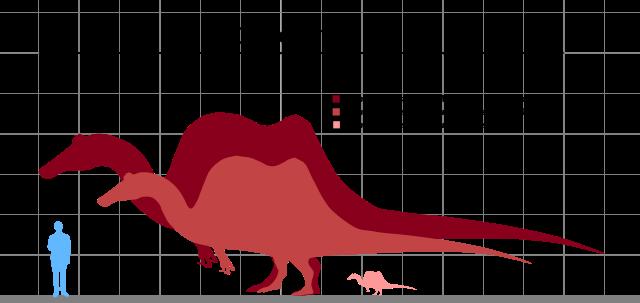 rozmiary spinozaura - porównanie z człowiekiem