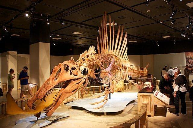 szkielet spinozaura