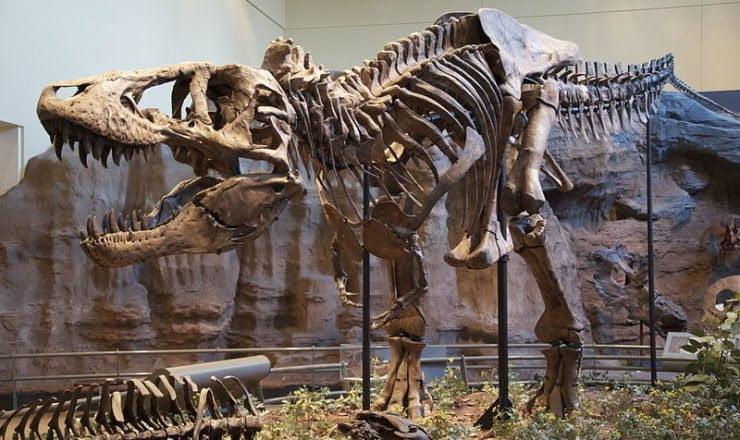 szkielet tyranozaura