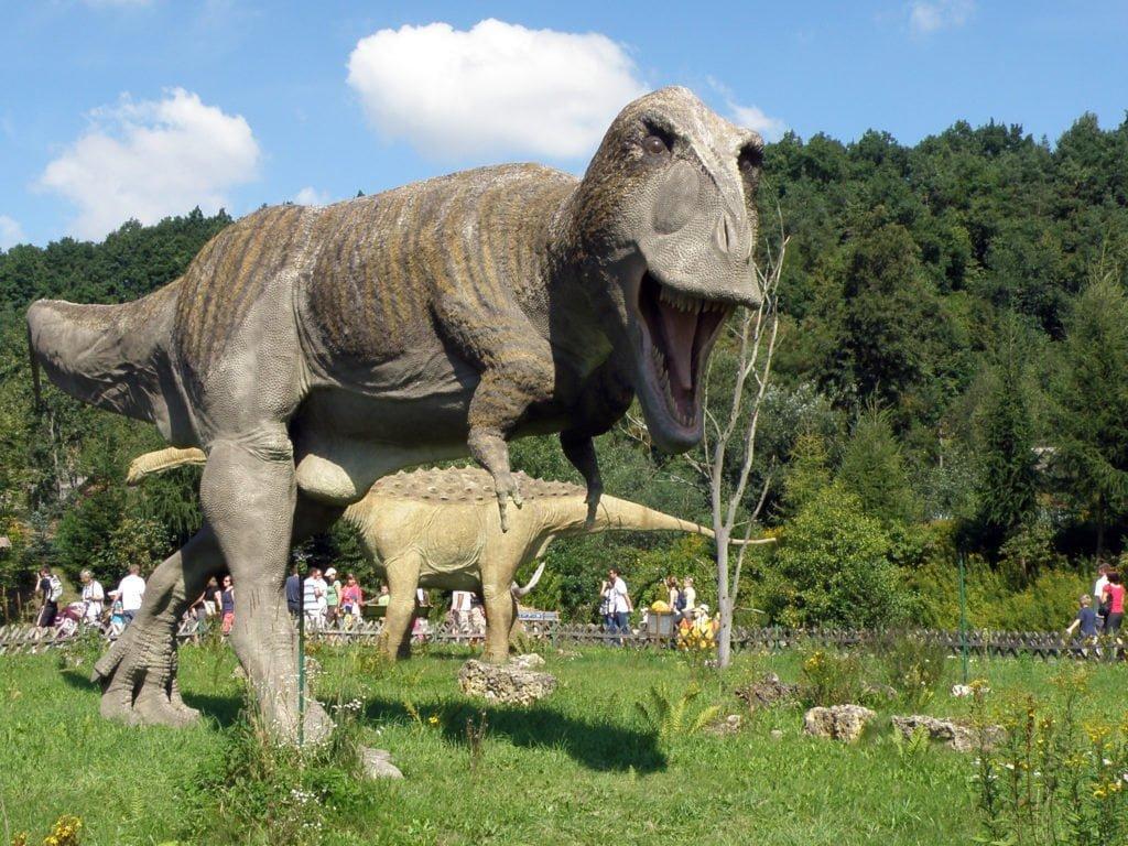 tyranozaur rex w bałtowie