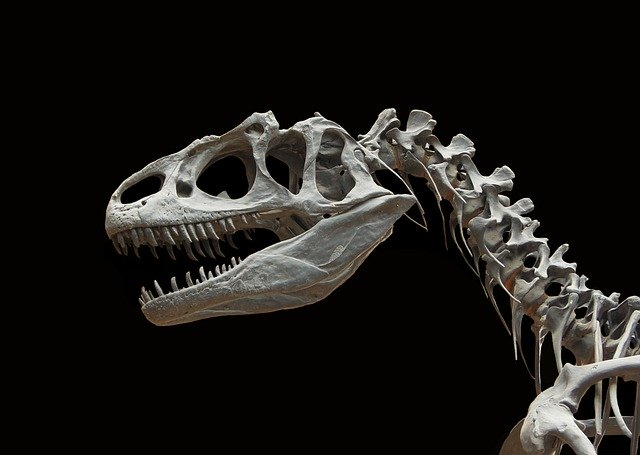 Allozaur - kości czaszki