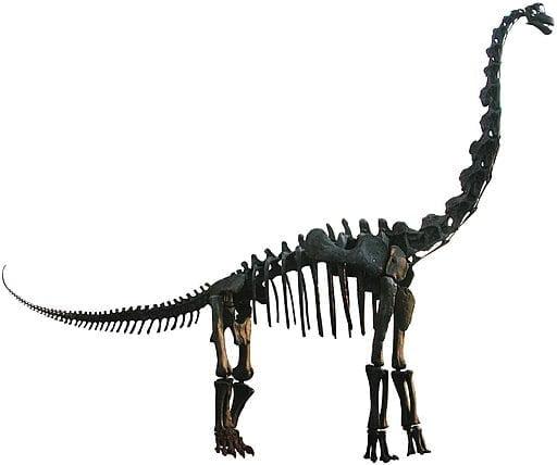 branchiozaur - szkielet