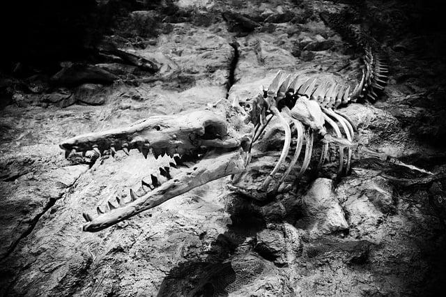 szkielet mozazaura