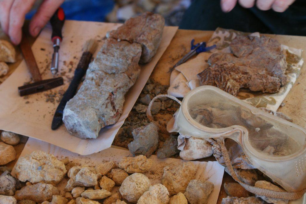 warsztaty-paleontologiczne